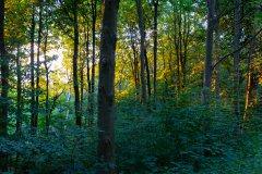 180708 - Howsham Woods - 014