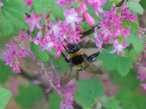 Pollen Time